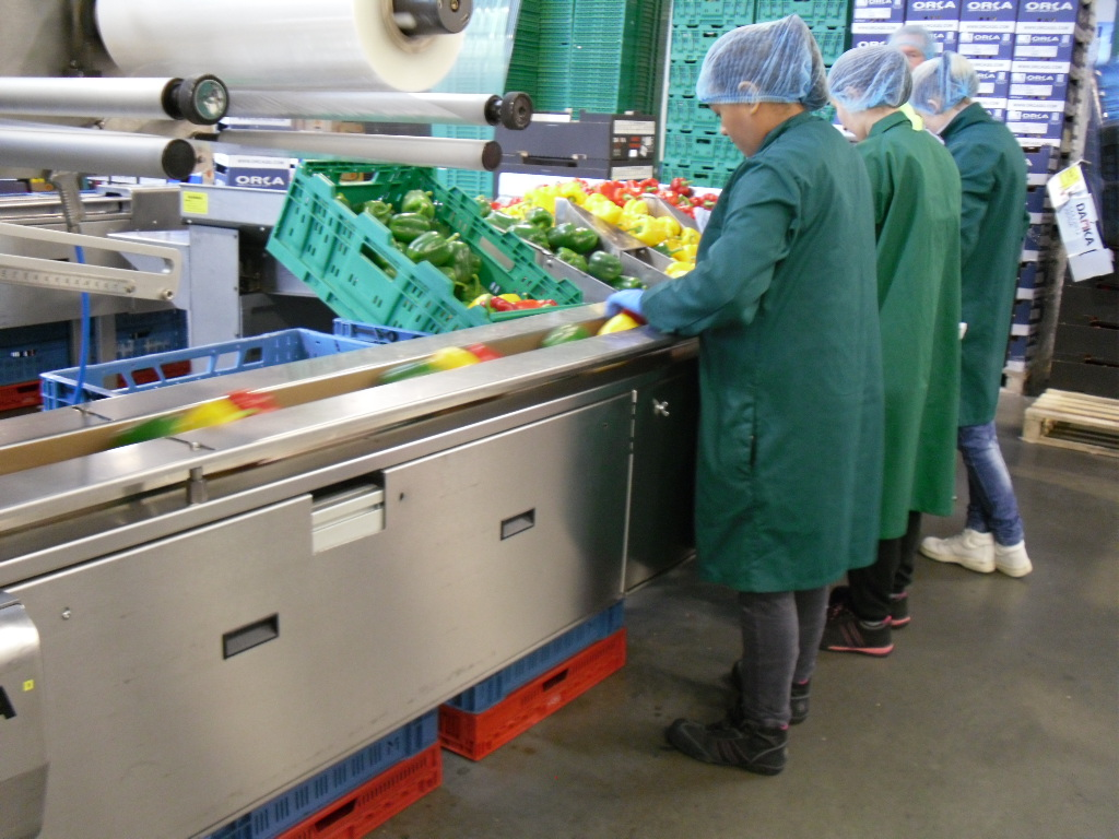Checking and packing the produce