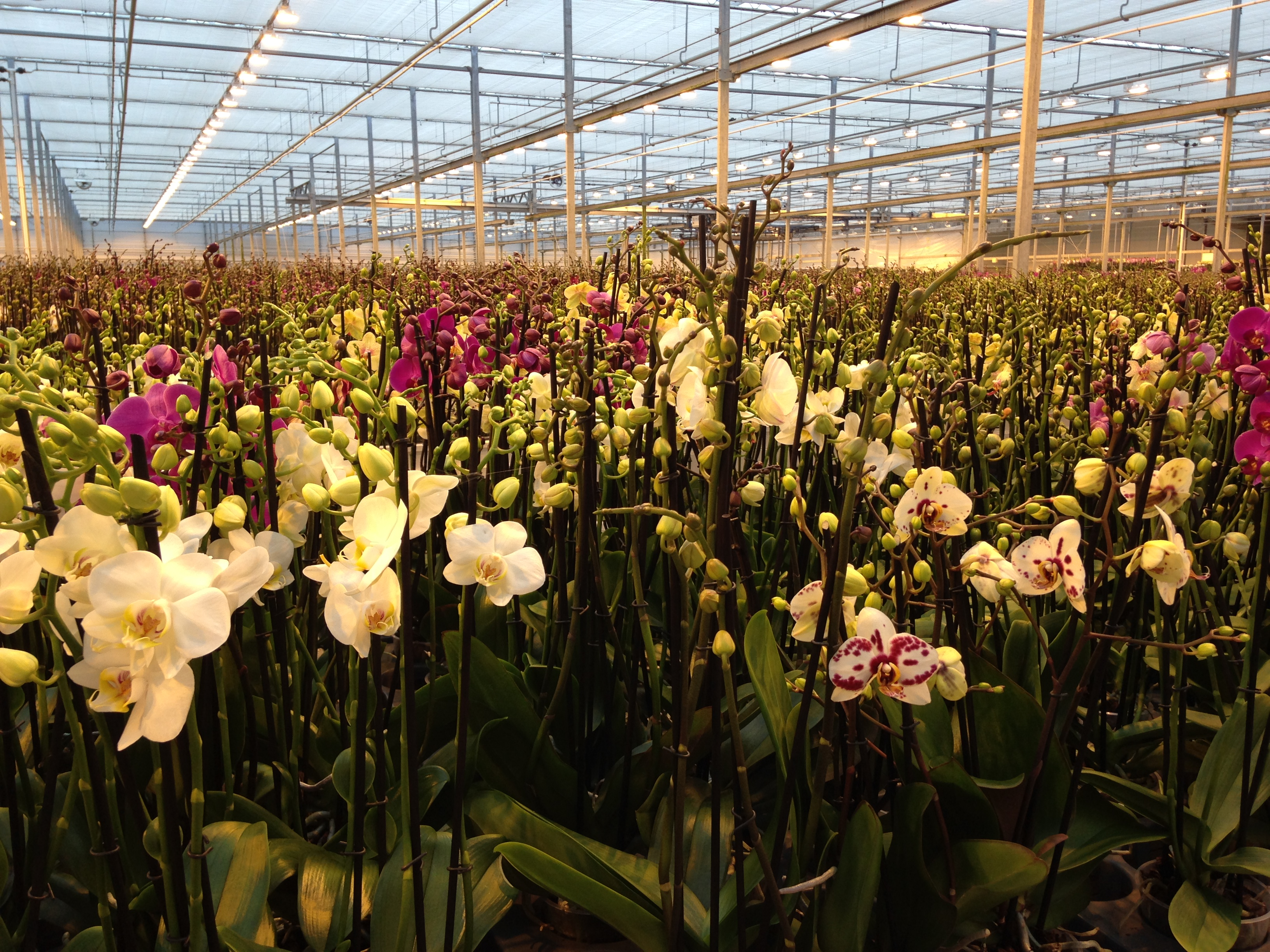 Learn about plants and quality control in the greenhouse