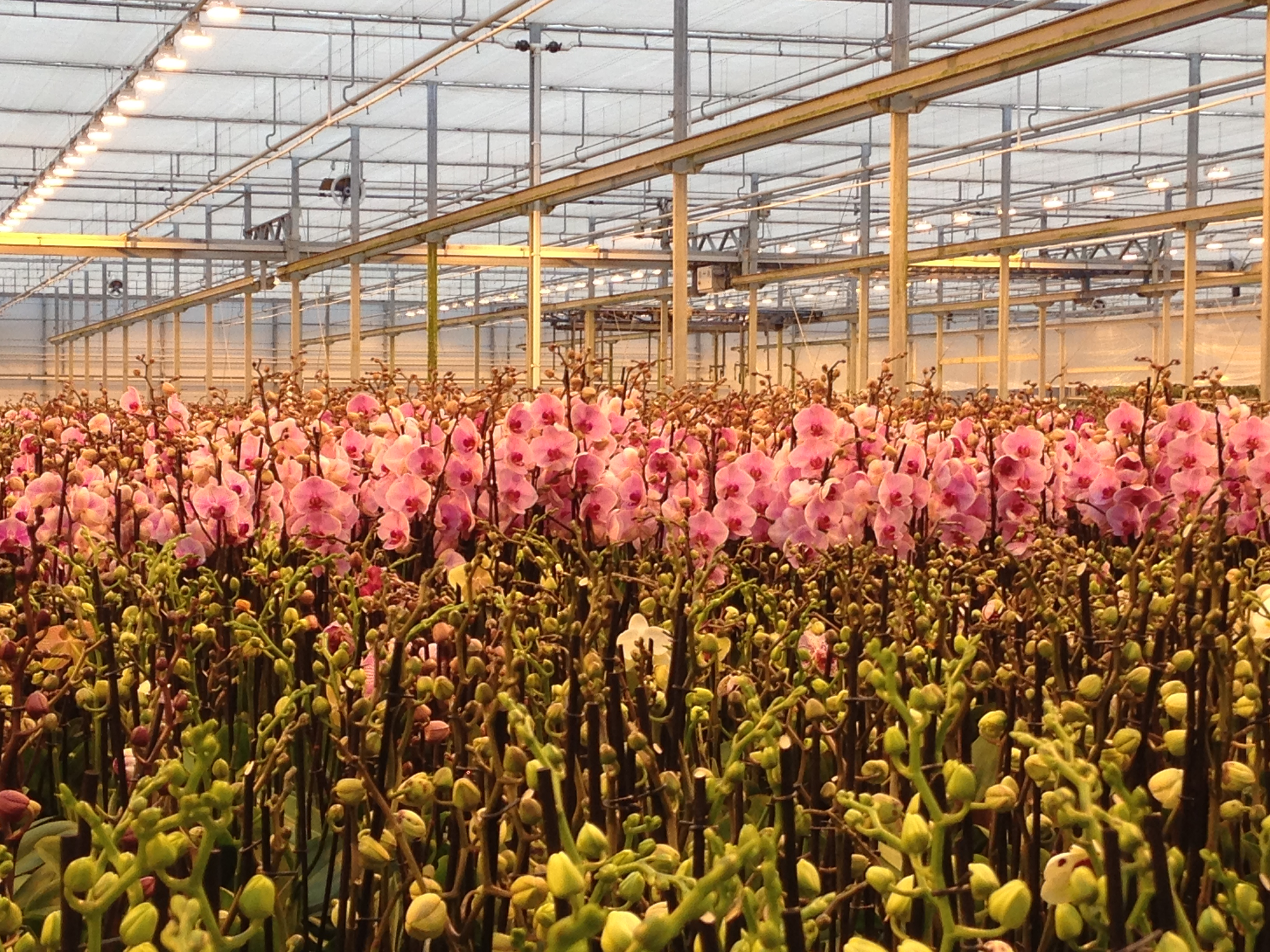 Work with the best orchid farmers