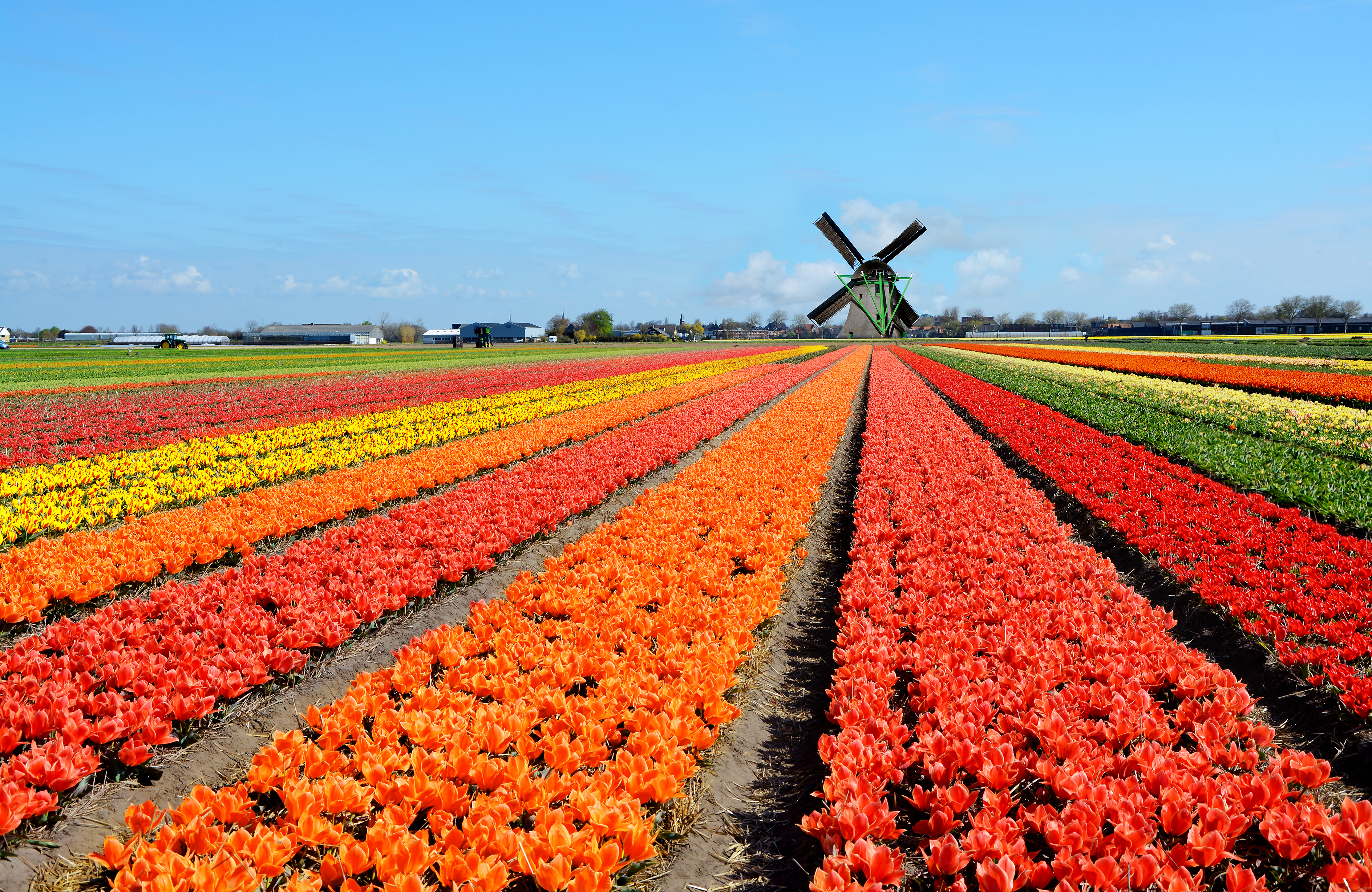 Windmill with field of flowers